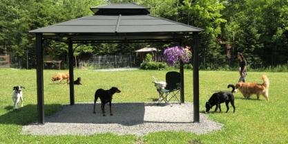 Repos extérieur des chiens