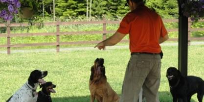 Apprentissages pour les chiens